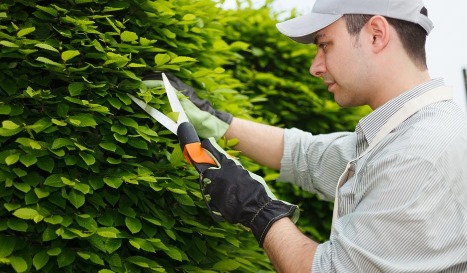 Jardineros En M Rida Ecotap Jardiner A Y Fumigaci N